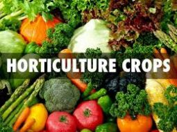 Horti Crops