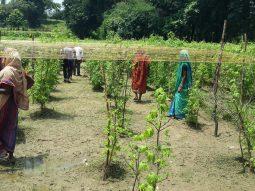 Odisha Transforming India