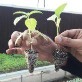 Seedlings_Pair