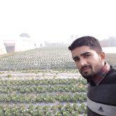 Ved in Open Field