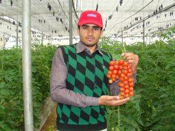Our Expert Ved Prakash